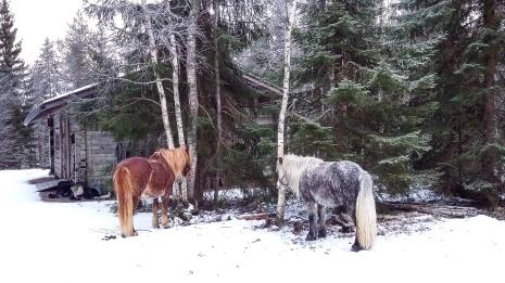 anna_horsies-122214