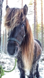 anna_horsies-123210
