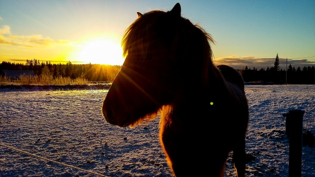 anna_horsies-141159