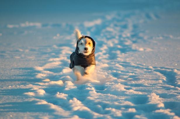 winter_nyrola-4993